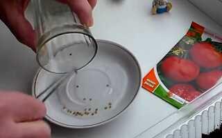Как сажать рассаду помидоров дома