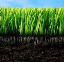 Почему самые богатые перегноем почвы называют черноземом