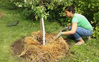 Мульча для плодовых деревьев