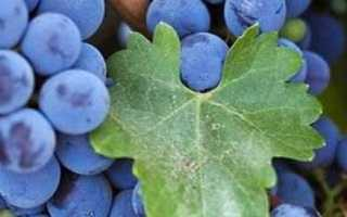 Содержание сахара в винограде изабелла