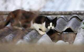 Чем отпугивать котов чтобы не метили