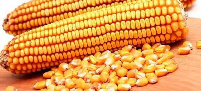 Кукуруза это овощ или злак