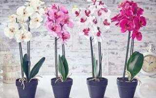 Вредна ли орхидея для человека