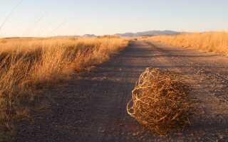 Кормовые растения для животных