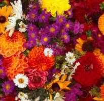 Названия осенних цветов с картинками