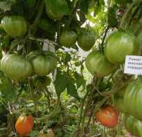 Сорт томата красное масляное сердце