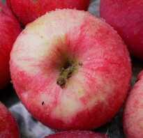 Молдавские сорта яблок названия