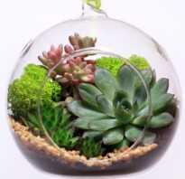 Садик в стеклянной вазе