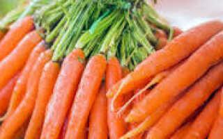 Морковь описание для детей