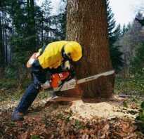 Техника валки деревьев бензопилой