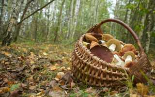 Проверка грибов луком при варке