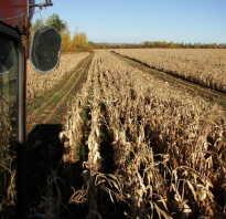 Кому требуется комбайн для уборки кукурузы