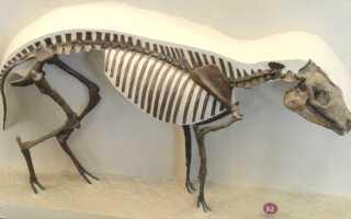Старинное название восточных породистых лошадей