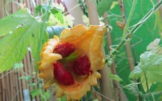 МОМОРДИКА! Выращивание из семян в домашних условиях