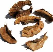 Перегородки грецкого ореха лечебные свойства для женщин