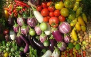 Какие овощи относятся к пасленовым культурам