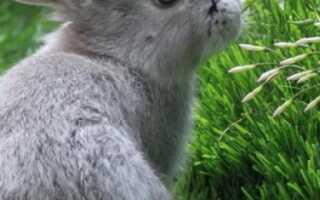 Можно ли кормить кроликов мокрой травой