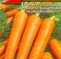 Сорт моркови красная без сердцевины