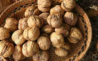 Тонкокорый грецкий орех сорт