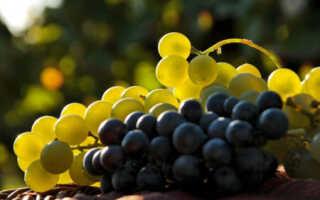 Как определить сахар в винограде