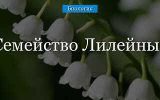 Цветок и плод лилейных
