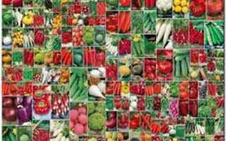 Семеноводческие фирмы россии список