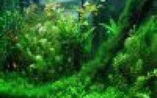 Основные особенности условий жизни водных растений