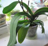 Орхидея долго не цветет что делать