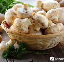Пищевая ценность грибов шампиньонов