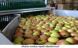 Обработка фруктов для длительного хранения