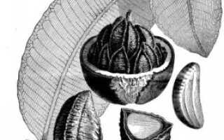 Сколько селена в бразильском орехе
