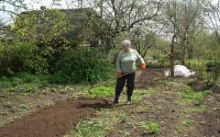 Что посадить на 6 сотках начинающему садоводу