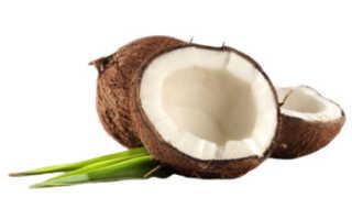 Мякоть кокоса польза и вред