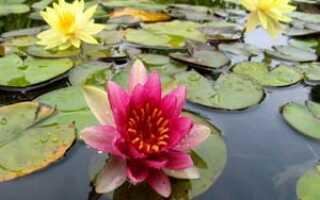 Цветы которые растут на болоте название